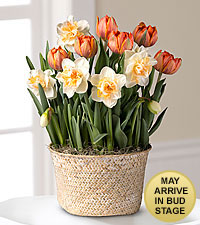 Orange Crush Tulip & Daffodil Bulb Basket