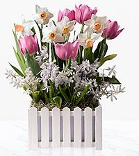 Garden Gate Tulip & Hyacinth Bulb Garden