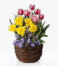 Spring Has Sprung Bulb Basket