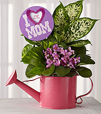 Garden Ready Mother's Day Watering Can Dish Garden