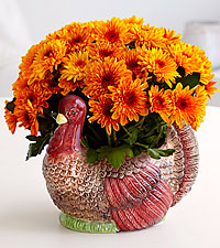 Gobble On Harvest Turkey Mum Plant