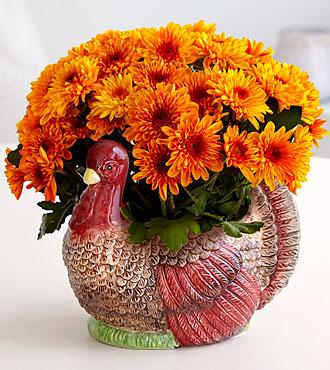 Gobble On Harvest Turkey Mum Plant