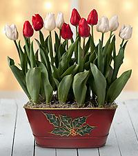 Happy Christmas Tulip Bulb Basket