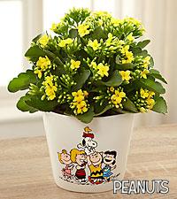 Forever Friends Peanuts™ Kalanchoe Plant