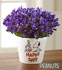 Happy Day Peanuts™ Campanula Plant