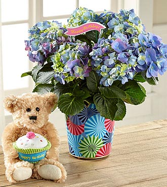 Best Day Ever Birthday Hydrangea with Plush Bear