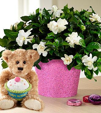 Set to Sparkle Birthday Gardenia with Chocolates & Plush Bear