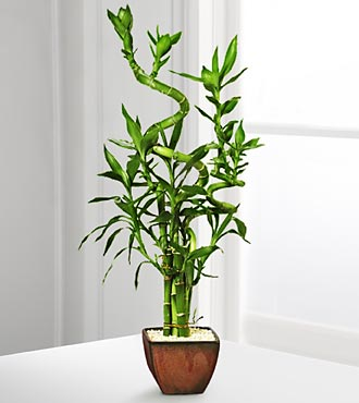 Lucky 7 Bamboo Arrangement