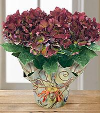 Autumn Memories Vintage Hydrangea Plant