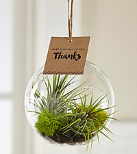 With Many Thanks Hanging Air Plant