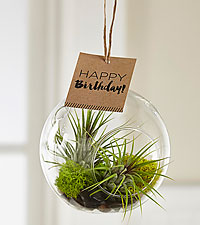 Send Plants Online for Birthday Gifts Birthday Plants Delivered FTD