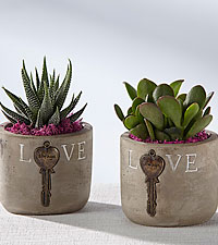 Love Always Succulent Duo