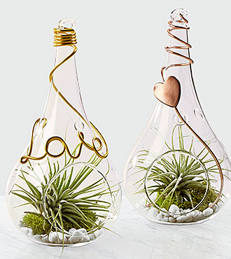 Love is in the Air Valentine's Day Terrariums