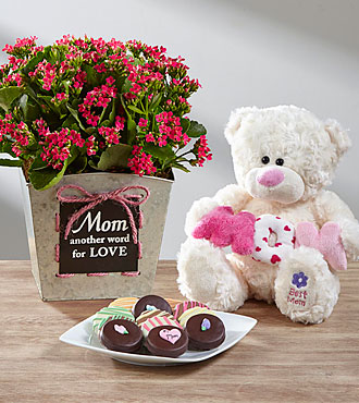 Mom = Love Mother's Day Kalanchoe Ultimate Gift