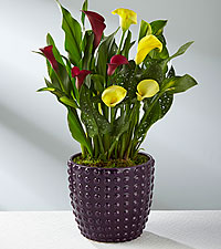 Color Inspirations Calla Lily with Chocolates- BEST