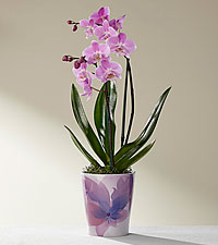 Fit for a Queen Mother's Day Orchid