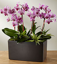 Garden of Gorgeous Mother's Day Orchids