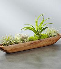 Life Aquatic Succulent Garden