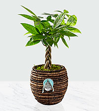 Peaceful Surroundings Braided Zen Plant
