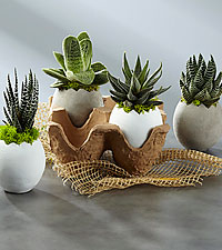 Egg-cellent Ideas Springtime Succulents