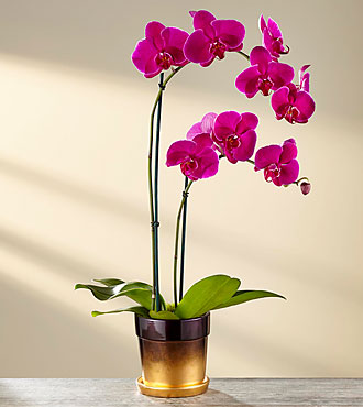 Flowering Fall Orchid