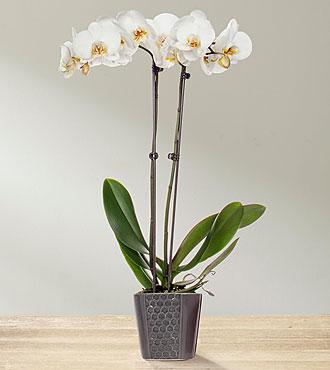 Amethyst & Quartz Serenity Orchid