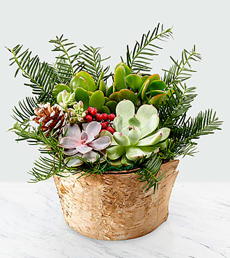 Heart of the Holidays Succulent Garden