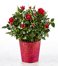 Follow Your Heart Mini Rose
