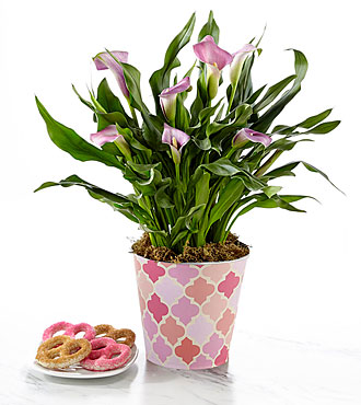Just for Mom Mother's Day Calla Lily Plant with Chocolate Covered Pretzels