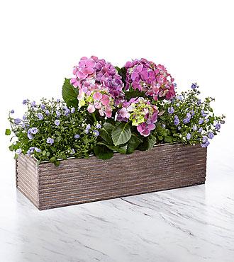 Purple Inspires Windowbox Dish Garden