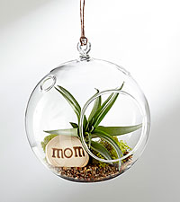 Happy Mother's Day Hanging Air Plant