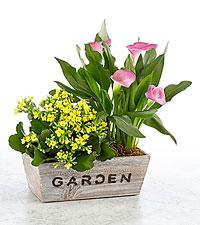 Come to My Garden Windowbox - GOOD