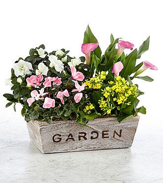 Come to My Garden Windowbox - BEST