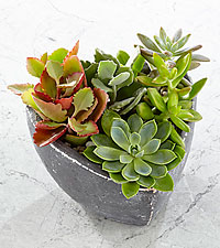 Spread the Love Heart Succulent Garden