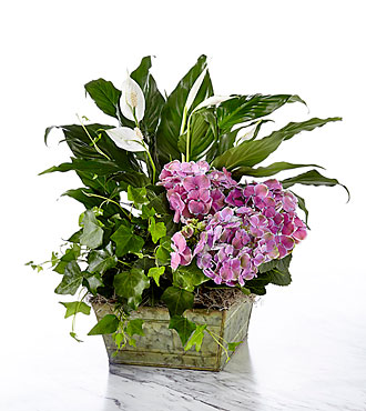 Be Inspired Blooming Basket - GOOD