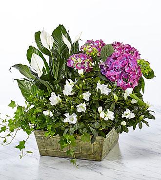 Be Inspired Blooming Basket - BEST