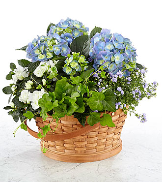 Whispers of Peace Sympathy Garden Basket - Blue & White