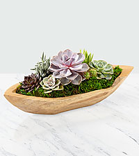 Sail Away Succulent Boat