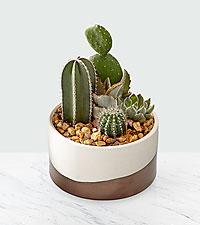 Desert Cool Cactus & Succulent Bowl