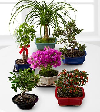 Bonsai of the Month - 6 Month Program