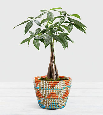 Braided Money Tree in Southwest Print Basket