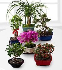 Bonsai of the Month - 12 Month Program