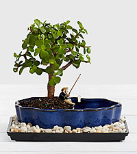 Jade Succulent with Bonsai Fisherman