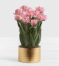 Luxury Pink Foxtrot Tulips