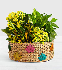 Sunshine and Joy Garden in Colorful Basket