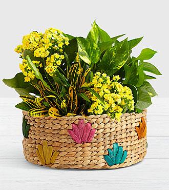 Sunshine and Joy Garden in Colorful Basket