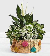 Peaceful White Garden in Colorful Basket