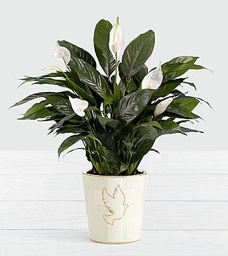 Lush Tropical Peace Lily in Dove Cross Ceramic