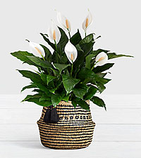 Peace Lily Floor Plant in Diamond Print Belly Basket