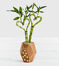 Double the Love Heart Bamboo in Heart Gem Planter